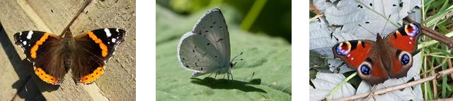 Butterflies - CC Attribution: Laurence Livermore, L. B. Tettenborn, Richard Dorrell